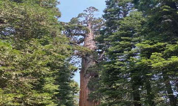 Sequoia Parks Conservancy